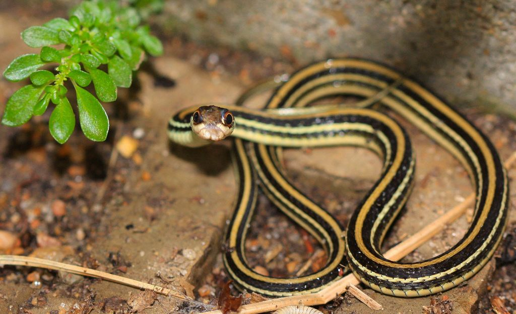 Can You Identify All Of These Texas Snakes Quiz Texas Snakes