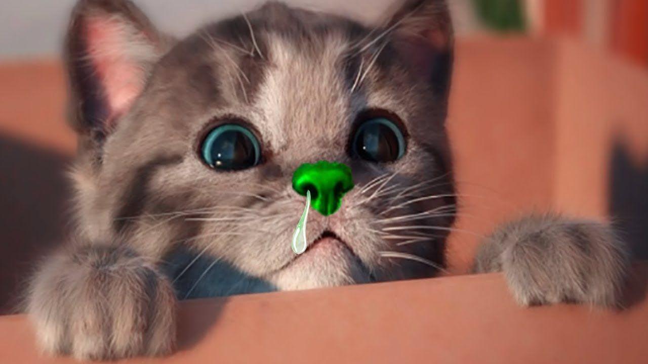 Little Kitten Play Fun Cat Pet Care Game Cute Kitty Animation Educational Gameplay Cute Cat Gif Kittens Cutest Cute Kitten Gif