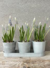 3 Zinc Pots On Tray www.sallybourneinteriors.co.uk