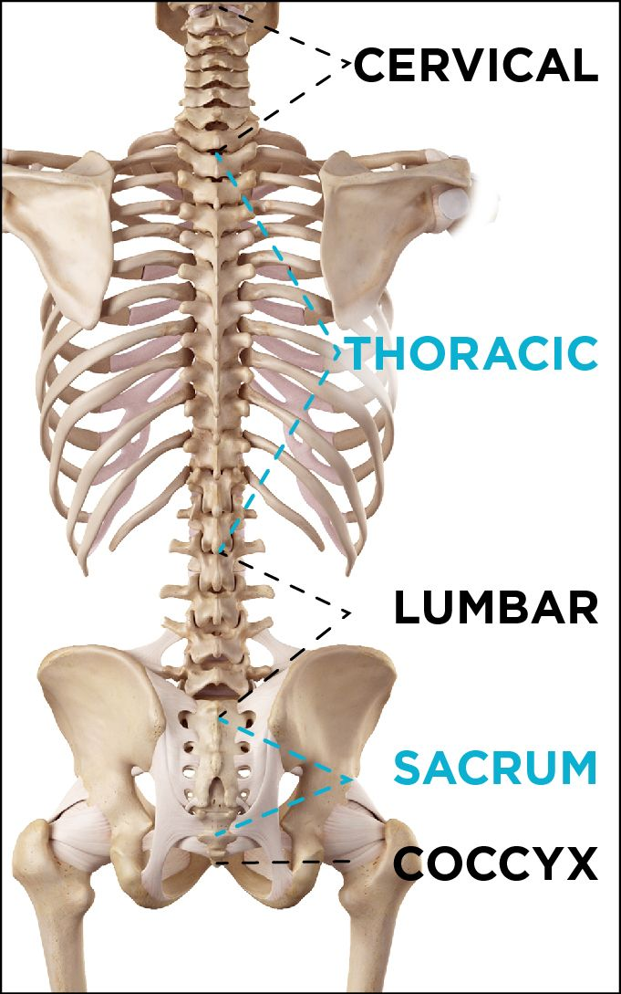 Tailbone Injury & Coccyx Pain | Medical, Spine surgery and Sciatica