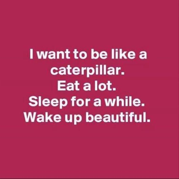 Funny Motivational Quotes Pinterest: Afternoon Funny Picture Dump 35 Pics