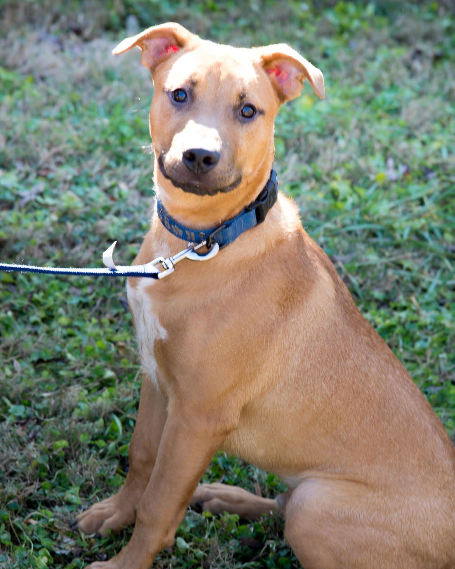 Adopt Champ on Dog adoption, Animals, Dogs