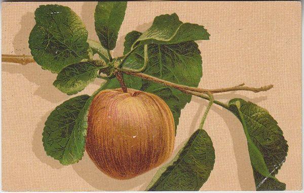 Õun oksa küljes; postkaart enne 1917
