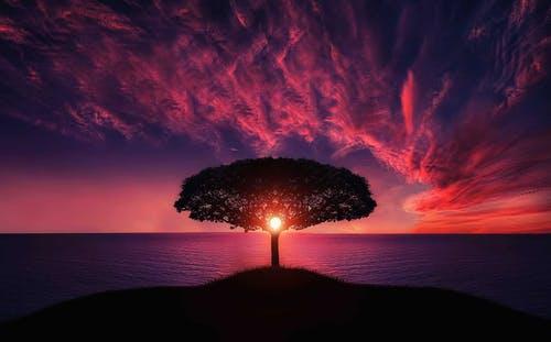 Photo of Silhouette of Tree Near Body of Water during Golden Hour · Free Stock Photo