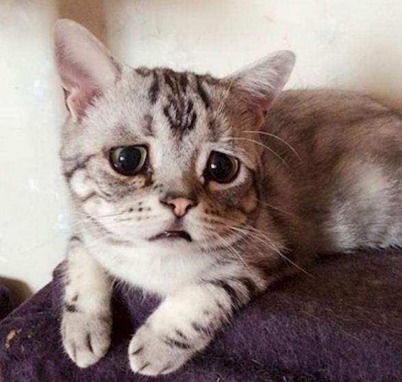 Meet Luhu The Saddest Looking Cat On The Internet Kucing