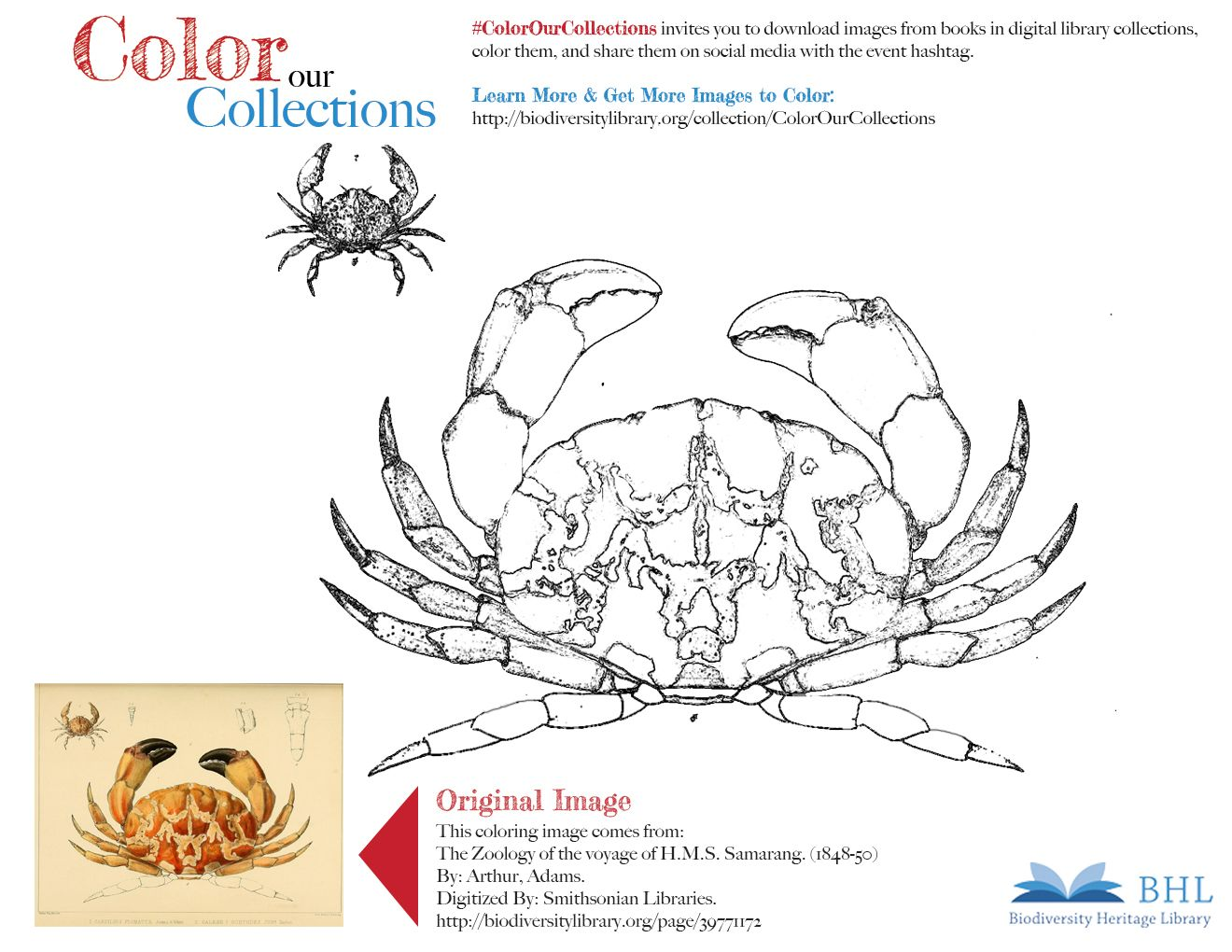 Colorourcollections Original Image Http Biodiversitylibrary Org Page 39771172 To Download This Image Right Click On Coloring Pages Color Coloring Books