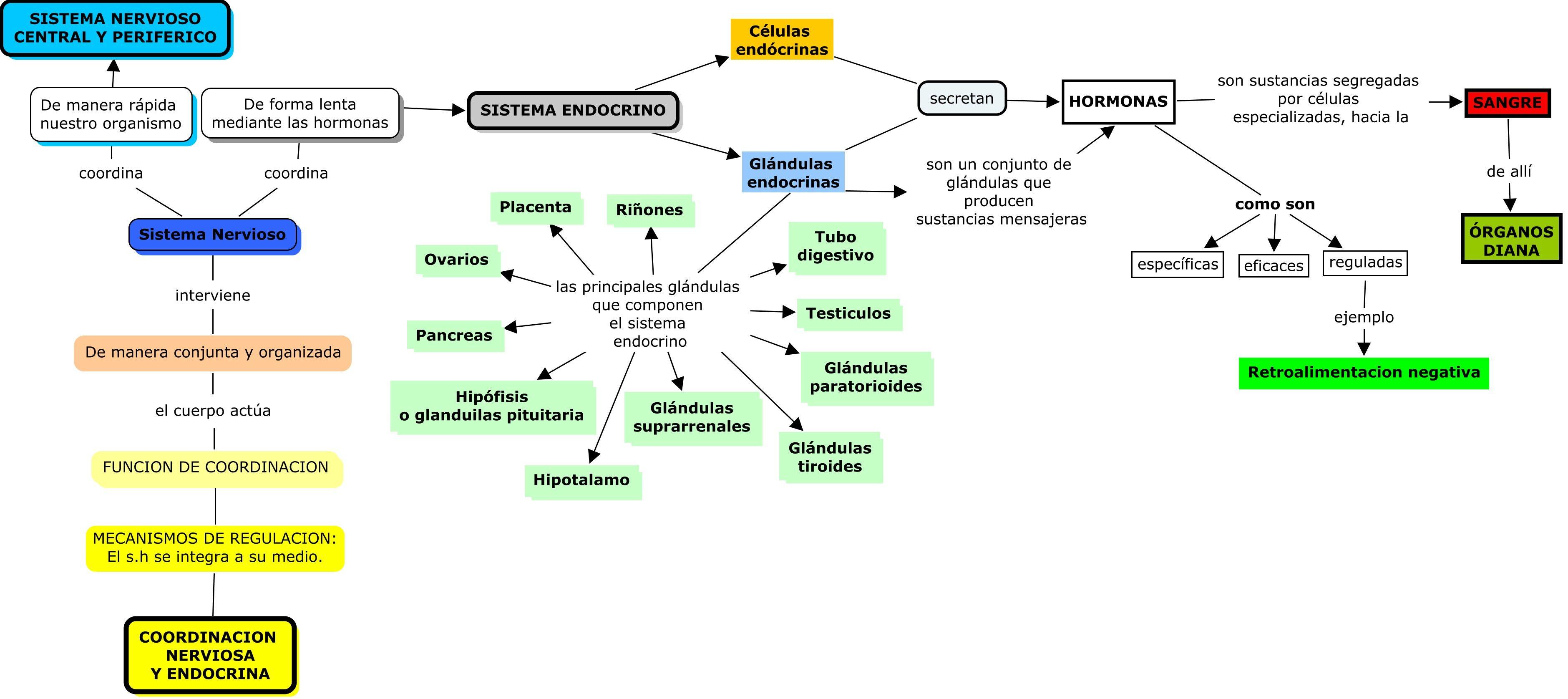 Atractivo El Diagrama Del Sistema Endocrino Ornamento - Anatomía de ...