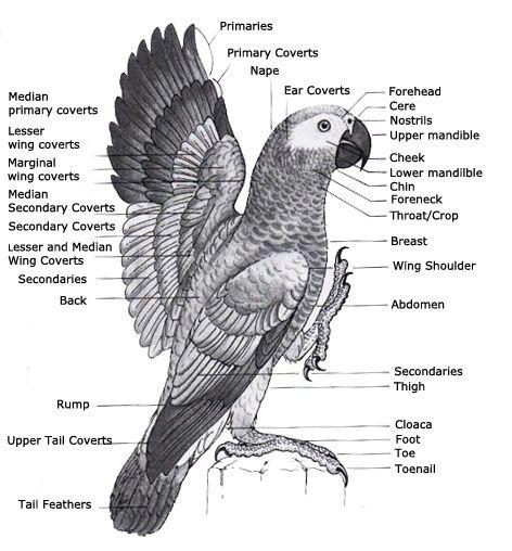 ag anatomy
