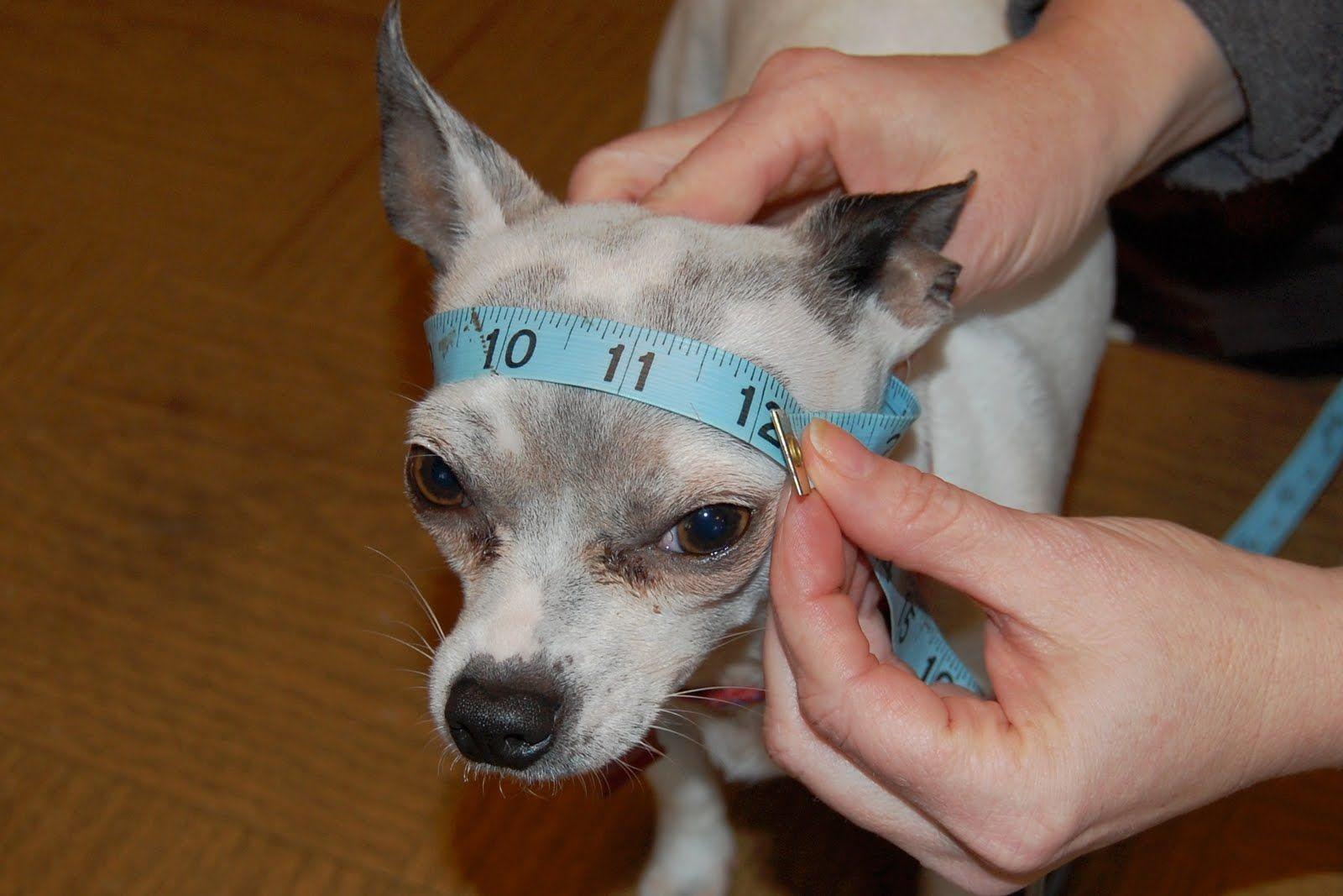 Visor For Dogs Crochet Pattern | Stricken häkeln, Stricken und Häkeln