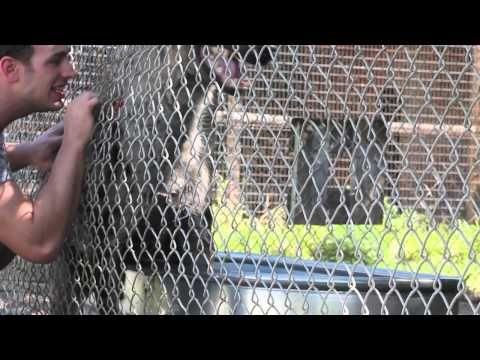 Él fue a visitar a una hiena que crió cuando era pequeña. Mira cómo reaccionó ella | Upsocl
