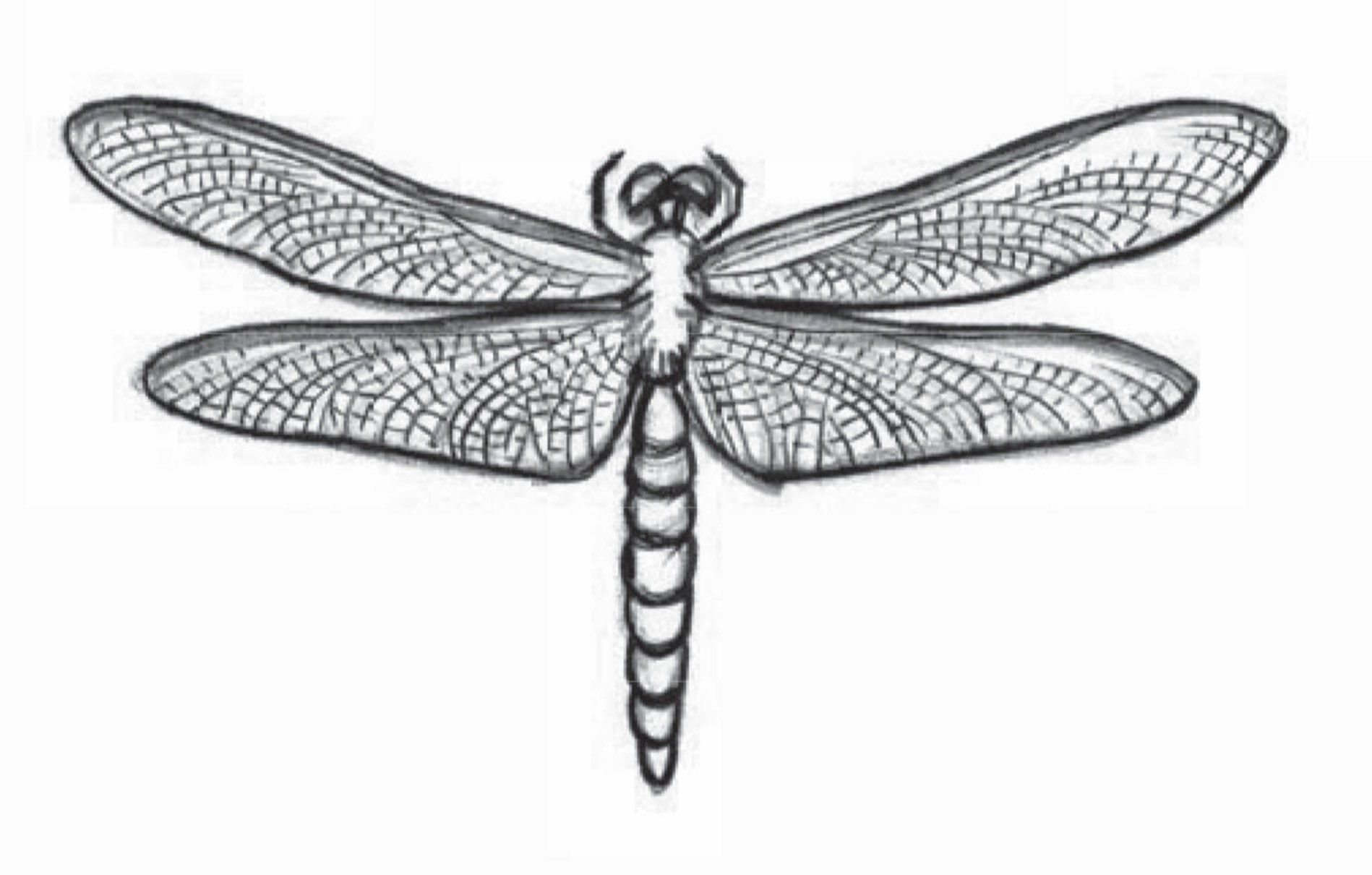 Draw a dragonfly drawings dragonfly animal drawings