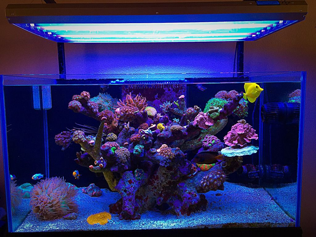 Tips and Tricks on Creating Amazing Aquascapes - Page 53 ...