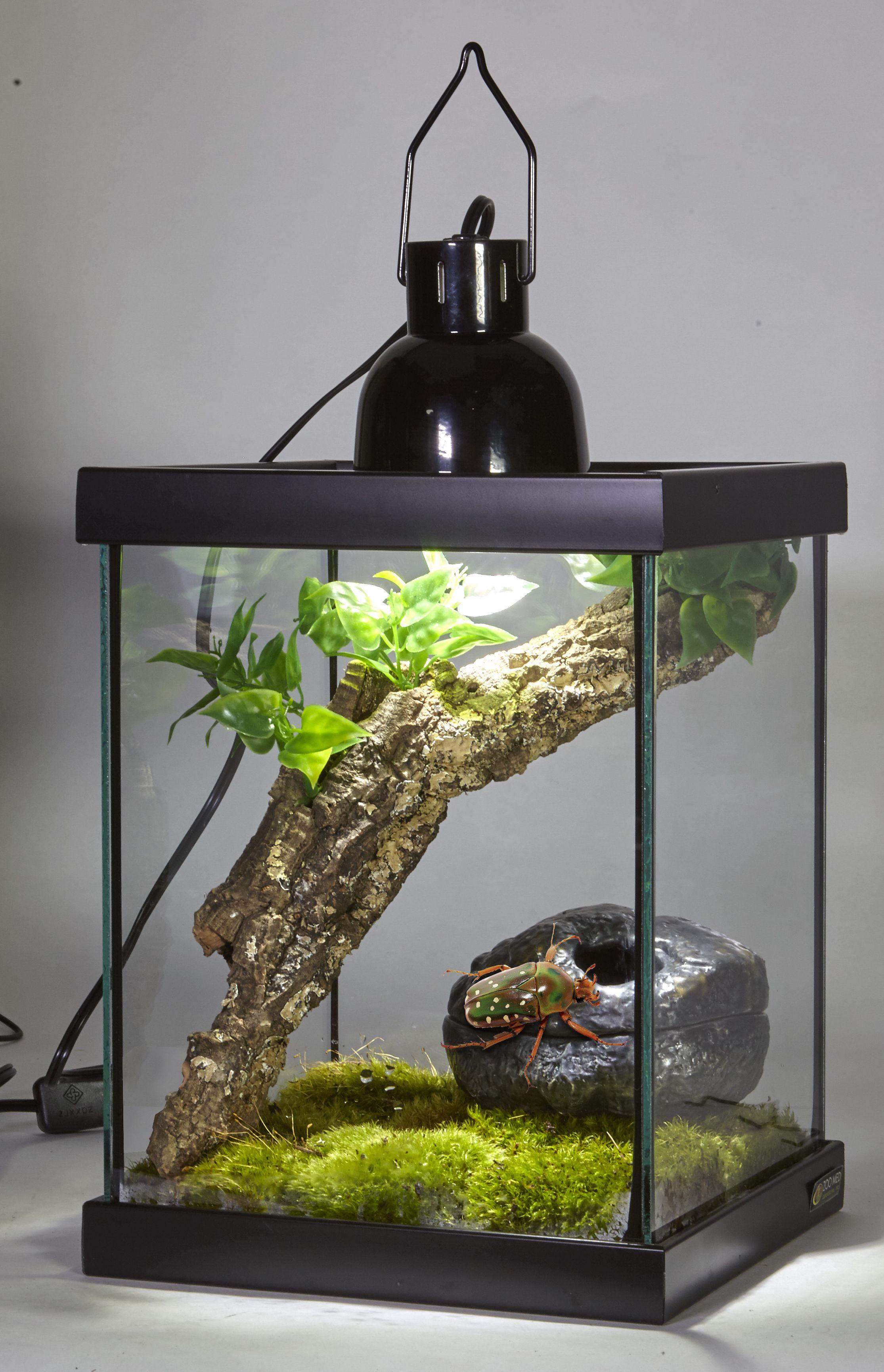 Bugarium Custom Habitat With Nano Dome Lamp Fixture Http Zoomed Com Terrarium Reptile Terrarium Glass Terrarium