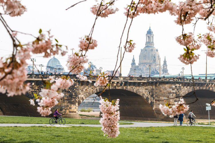 Bridges im Dresden