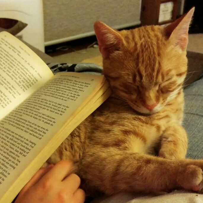 Cat likes to be read to.