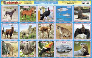 Chikipedia Y Chikilines Laminas Escolares Nº 144 Animales De La Costa Sierra Y Selva Animales Animales De La Selva Plantas De La Selva