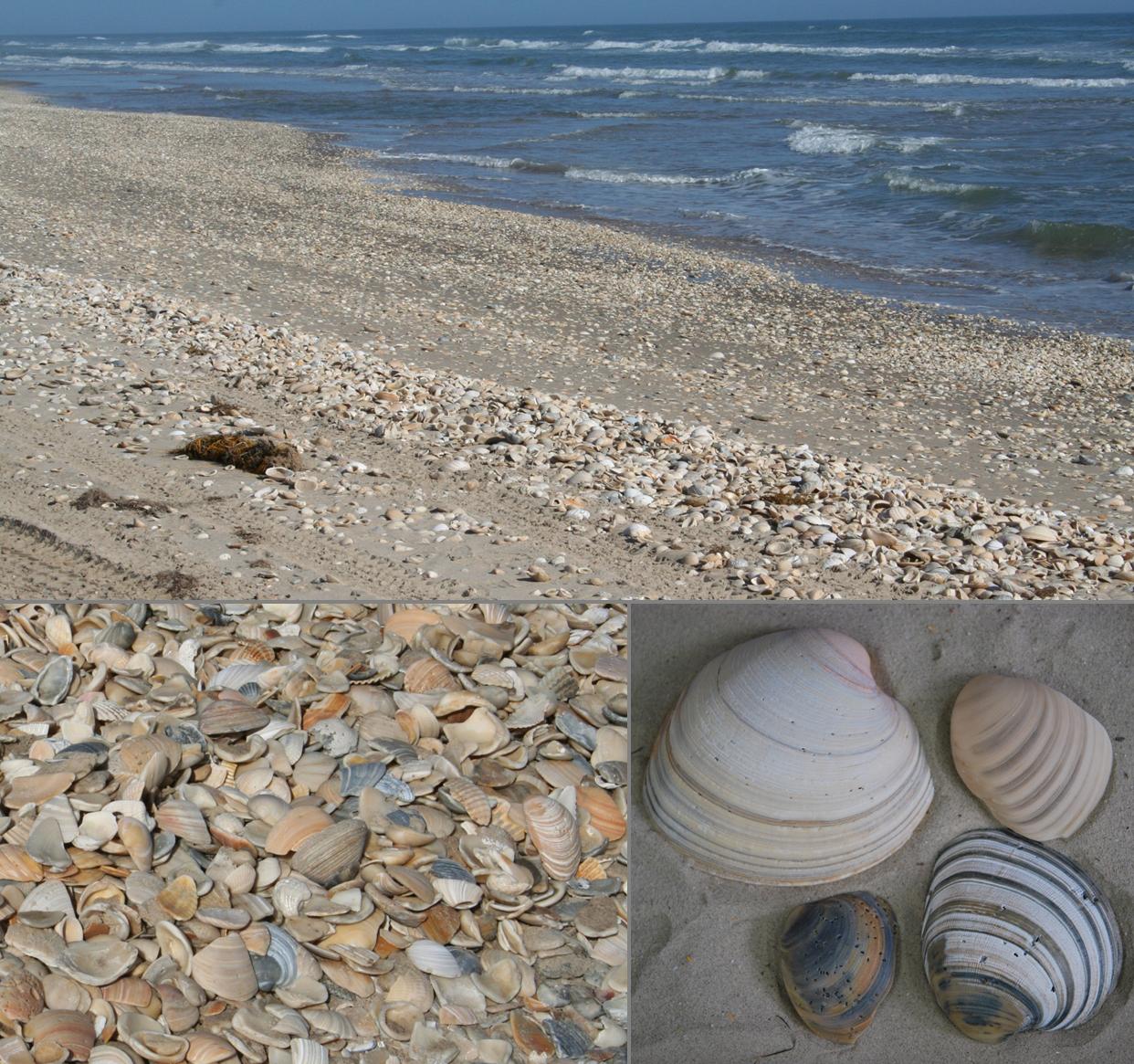 Shell Beach At Padre Island National Seas Nps Photos Sweet Pin Love This