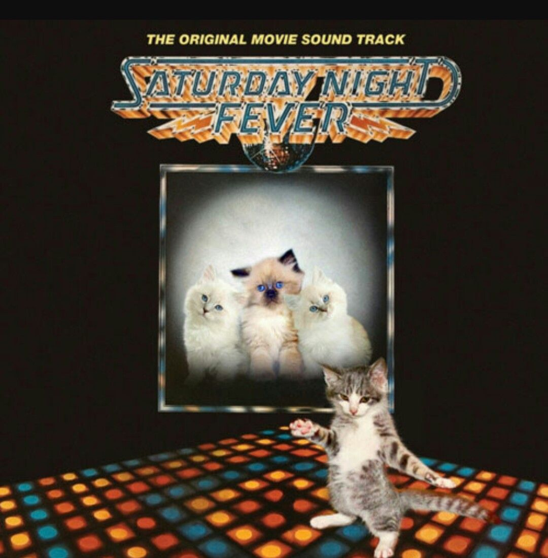 Pin By Cindi Switzer On Cats Music Crazy Cats Kittens Album Covers