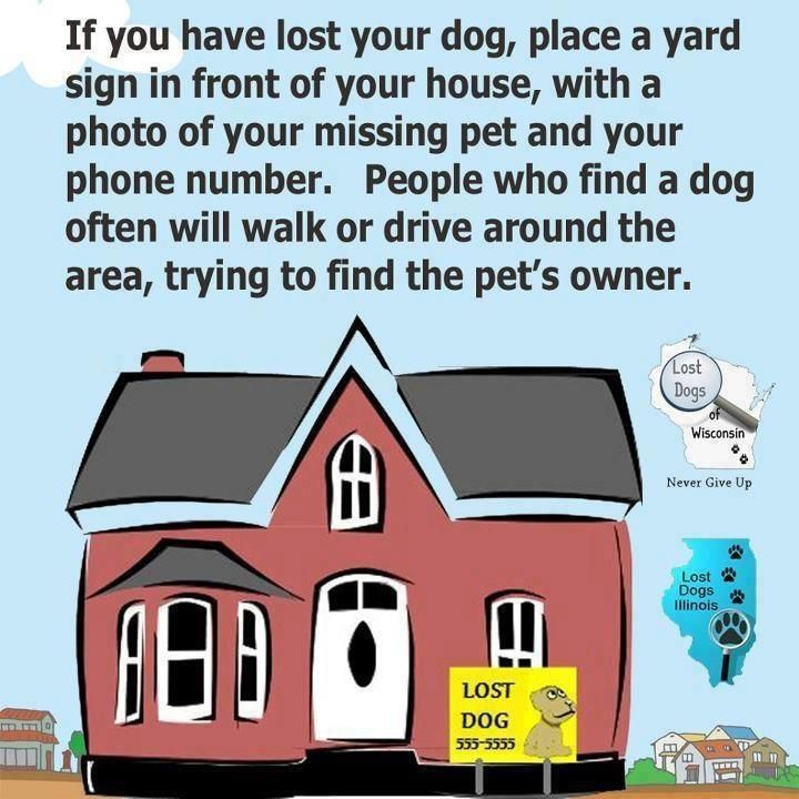 A good idea in addition to flyers Brilliant Ideas Pinterest - lost dog flyer examples