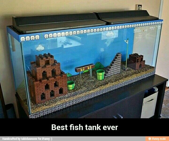 Only Way I D Ever Get Fishes Cause They Re So Delicious Cooler Fisch Aquarium Mario
