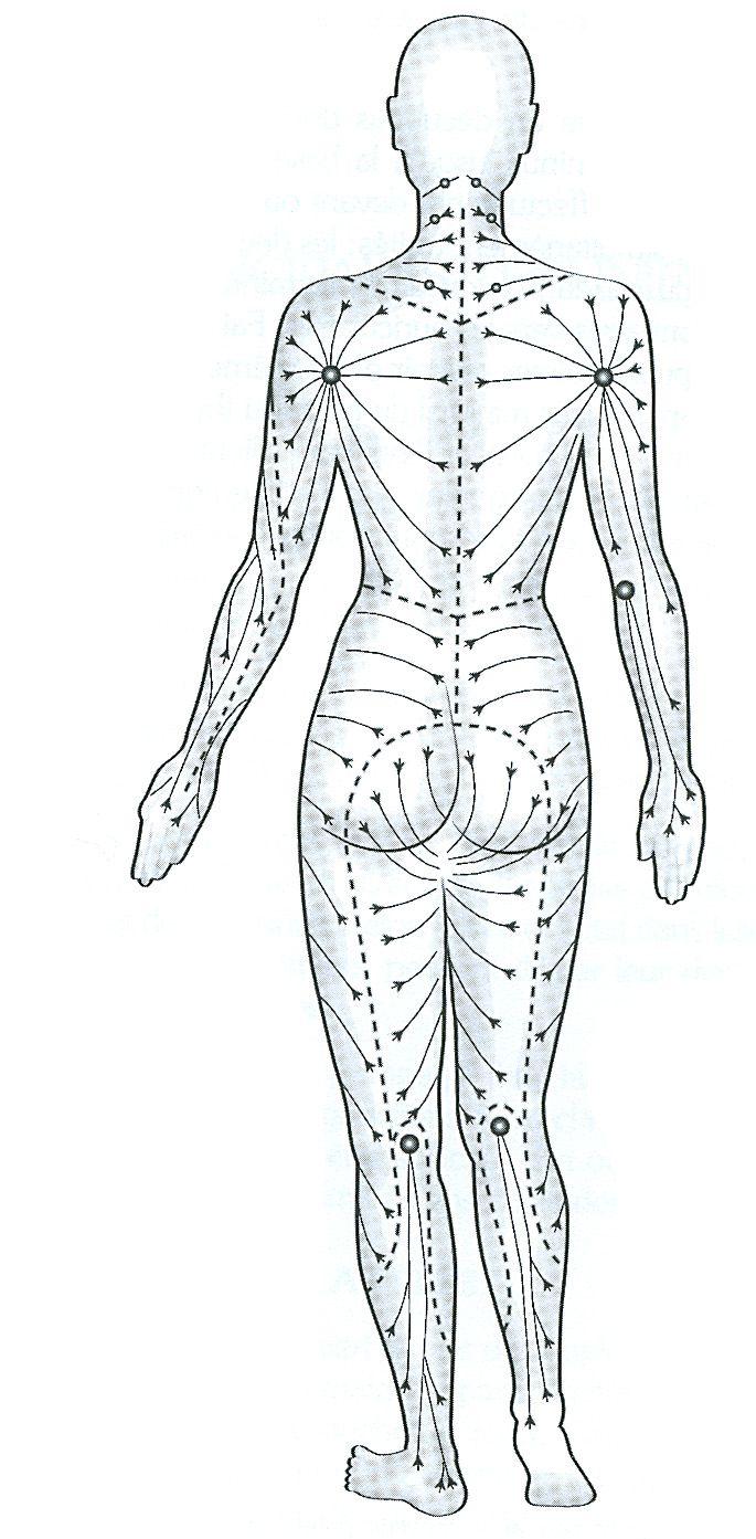 système lymphatique dos | SANTE | Pinterest | Sistema linfático ...
