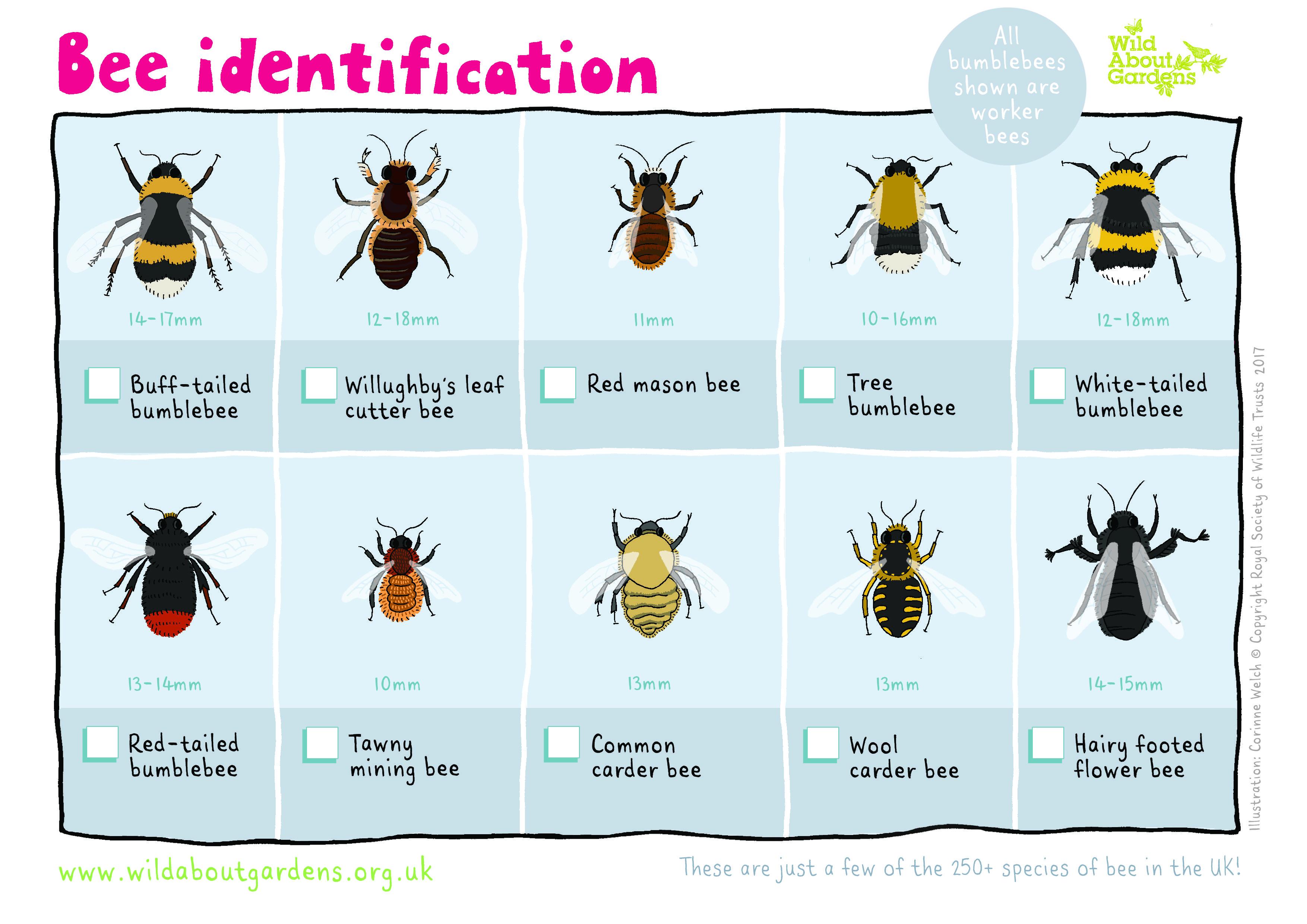 Bee Identification Sheet