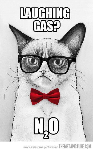 Grumpy Chemistry Cat…