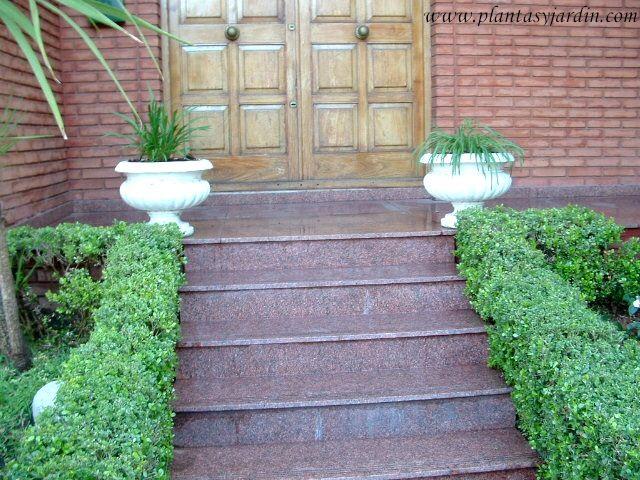 Tipos de setos entrada con seto de buxus sempervirens for Arbustos jardin pequeno