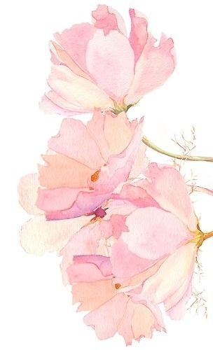Water Paint Wallpaper Watercolor Flower Background Flower