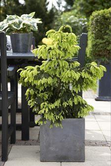 23++ Arbuste decoratif exterieur en pot inspirations
