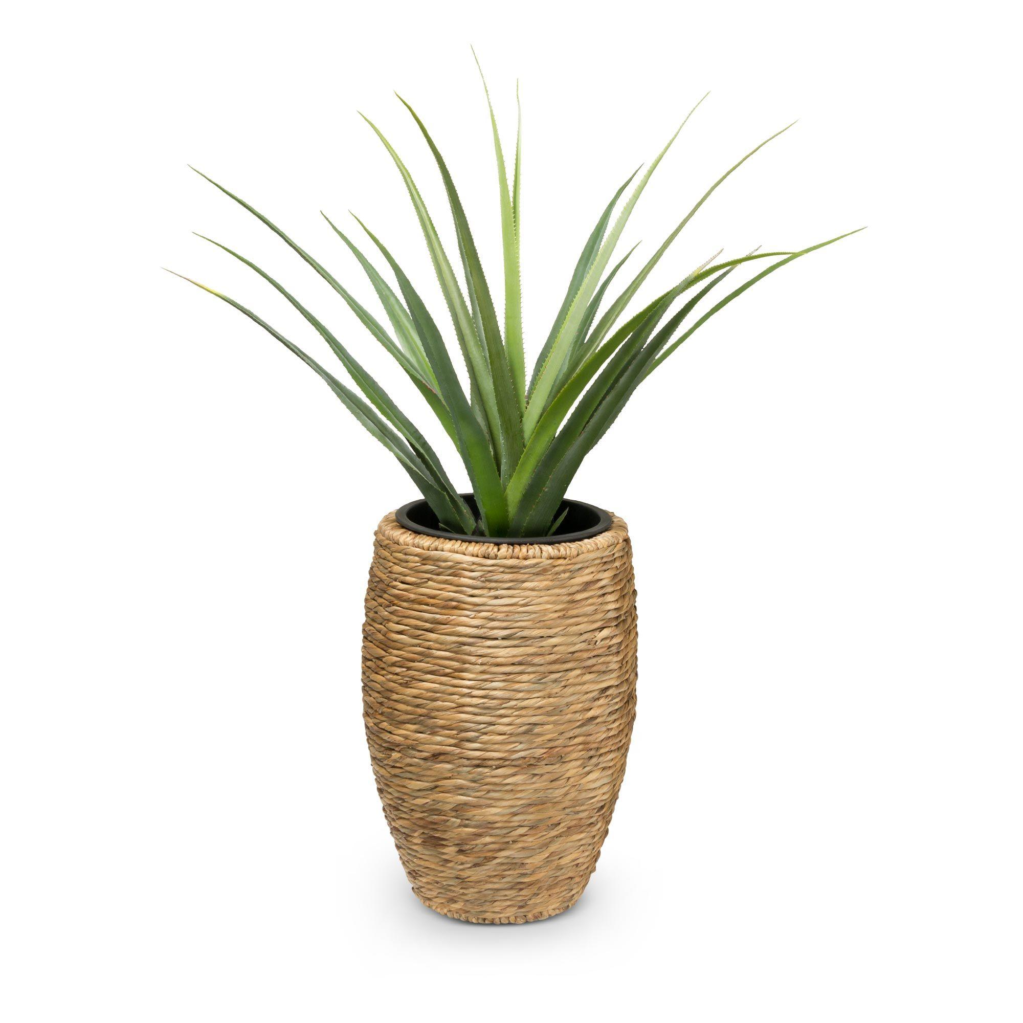 3er Set Pflanzkubel Ciga Wasserhyazinthe Pflanzkubel Pflanzen
