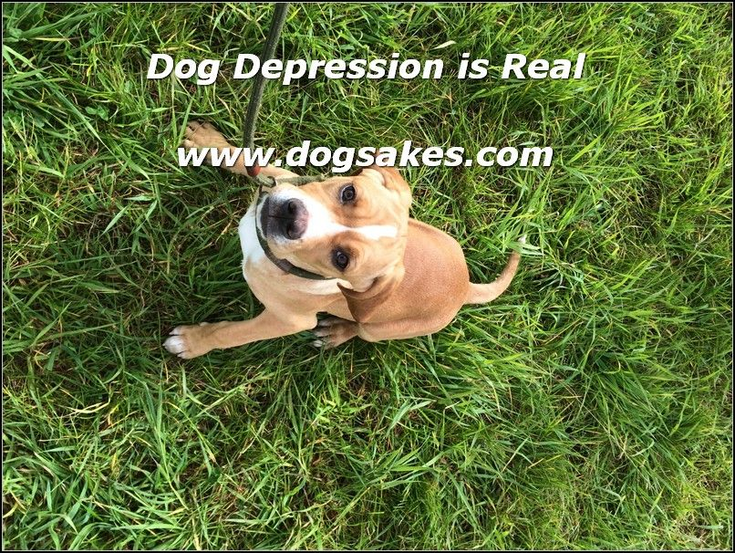 Interactive Dog Toys Exercise Interactive Dog Toys - Dog Sakes