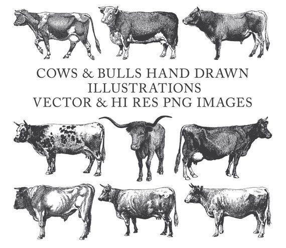 Cow Clipart Bull Clipart Farm Clipart Hand Drawn Engraving Cow