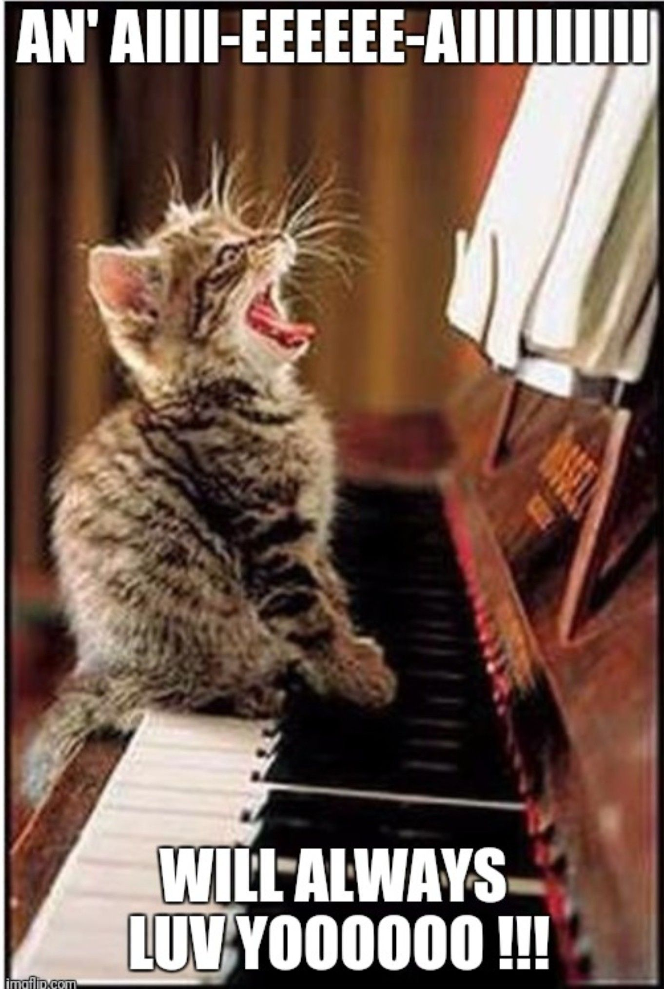 I Luv U Kitty Cats Funny Animal Memes I Love Cats