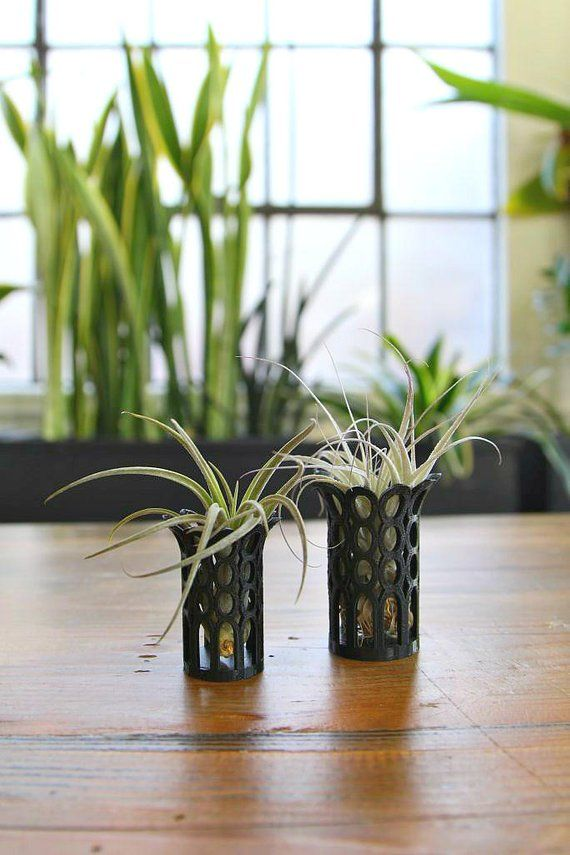 Unique Breathing Air Plant Holders Containers Queen Style