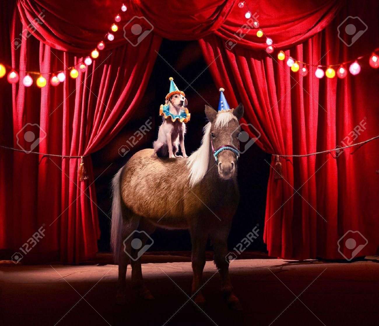 dog and pony show pin up - Google Search | Dog and Pony ...