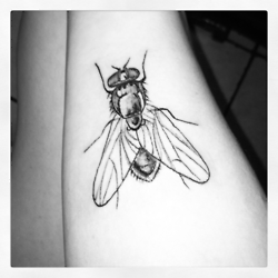 My Third Tattoo Of A House Fly Flying Tattoo Insect Tattoo