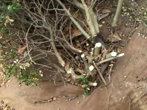 How To Get Rid Of Roots Of A Bush