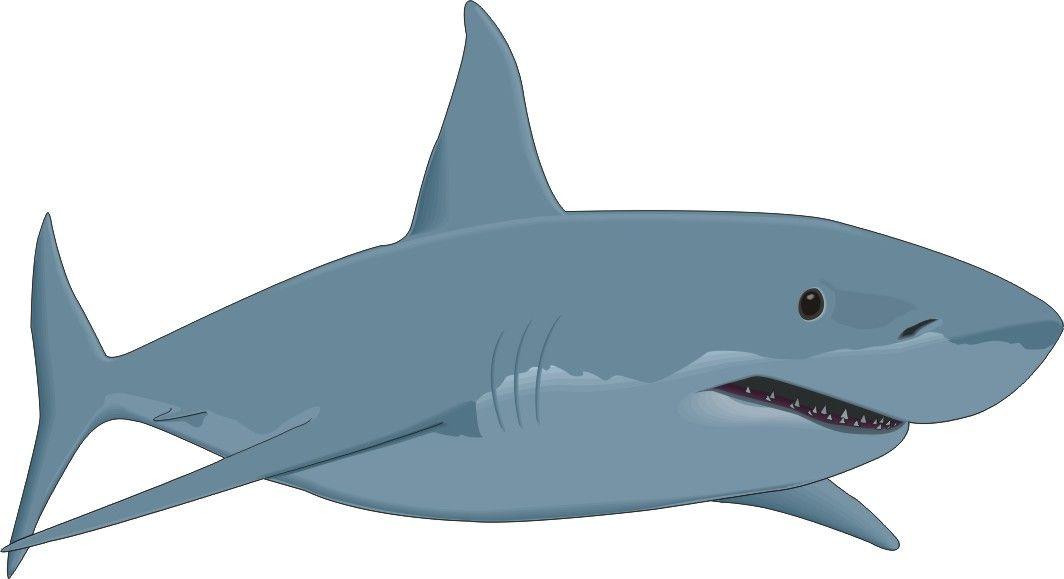 Shark Head Clipart