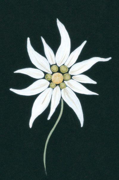 Edelweiss mommy daddy tattoo tattoo ideas schminken tutorials patroon bloem borduren - Coloriage fleur edelweiss ...