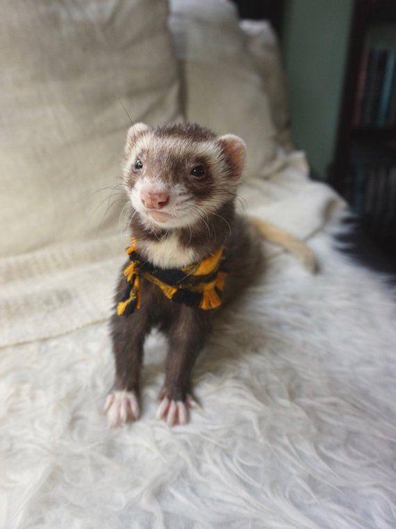 Ferret Bandana Flannel Scarf Snap On Pet Scarf Rat Bandana
