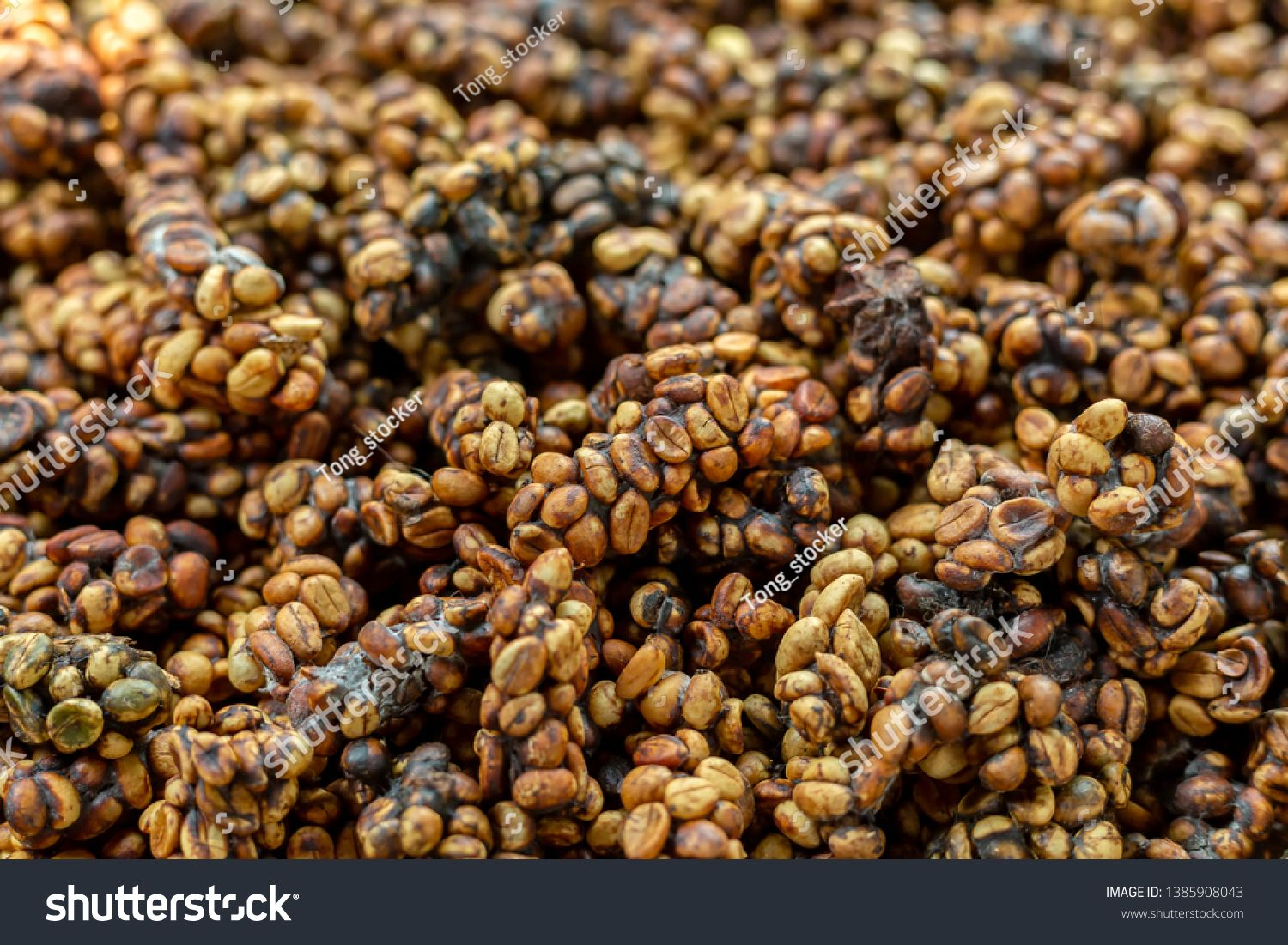 Kopi luwak or civet coffee, is one of the world's most