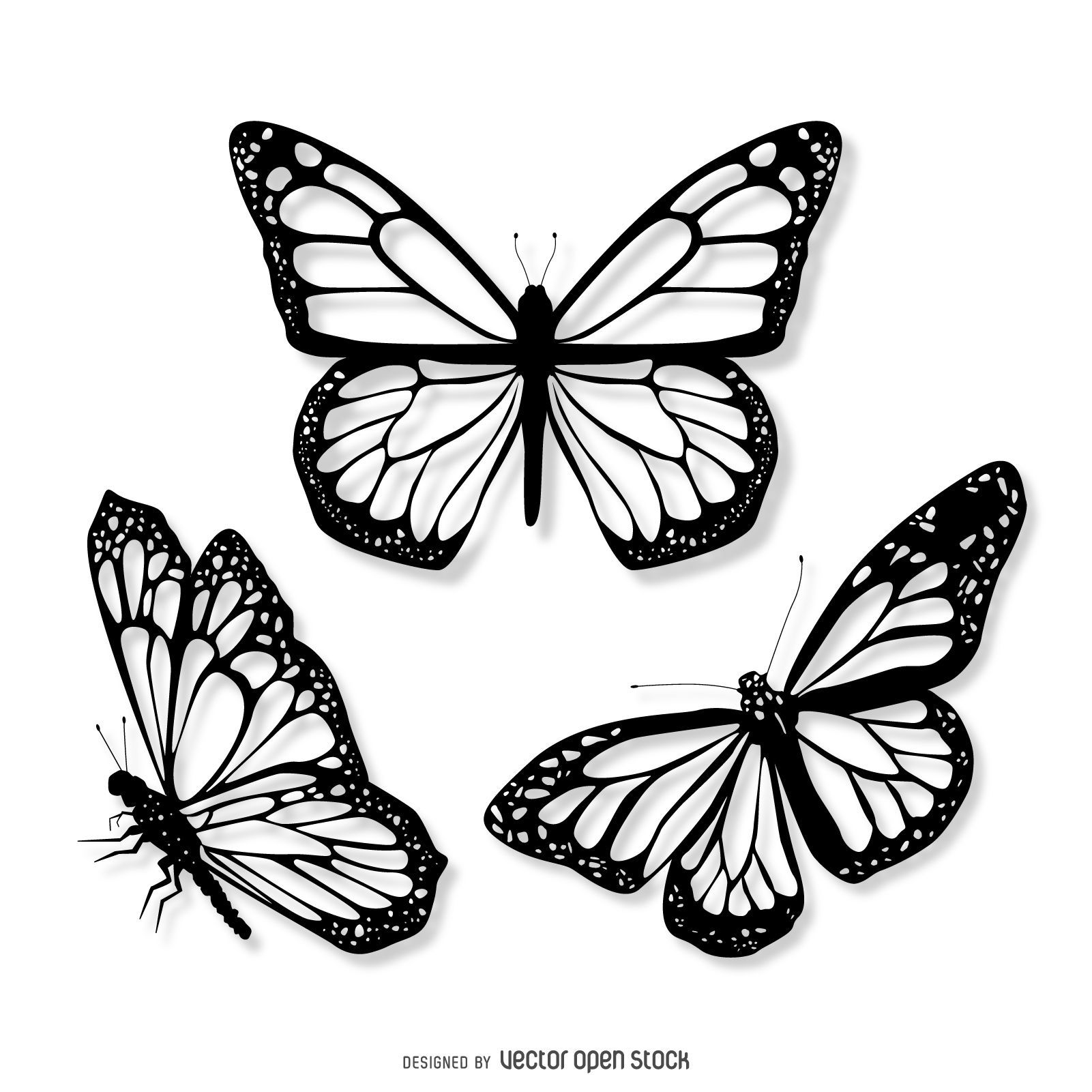 Verbreitet Grauzone Der Tiere Von Einer Spezies Auf Zwei Ubergang In 2020 Butterfly Black And White Butterfly Tattoo Designs Butterfly Illustration