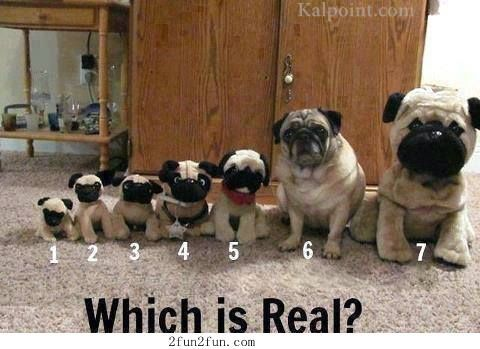 Which is real?