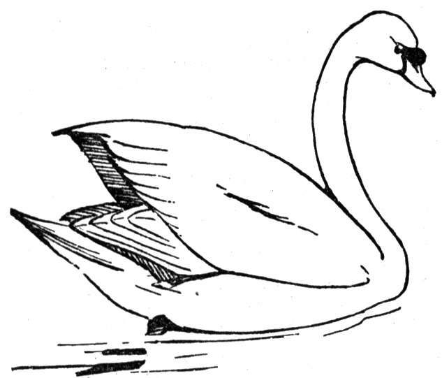Free Swan Coloring Pages 2 Swan