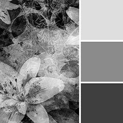 Hämärä vaimentaa kaikkia värejä, muuntaen ne harmaan sävyihin.