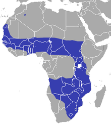 The blue represents the African Savanna, as you can see it takes