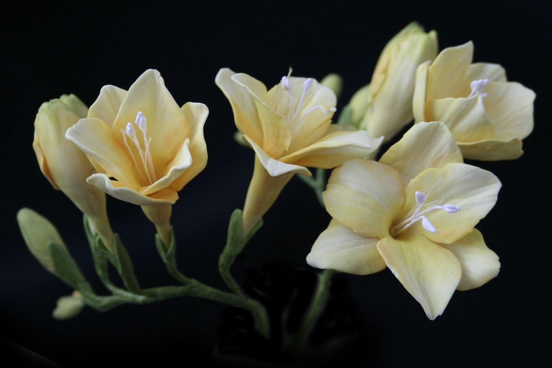 Очень понравилось, цветы фрезия картинки