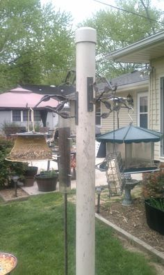 Exceptional Bird Feeder Pole. Bought A Broken Piece Of PVC Pipe For A $1.00 And An