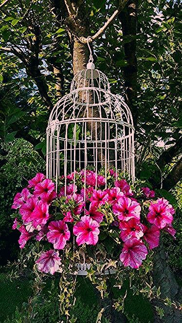 Photo of Gartenblumen – Garten Design